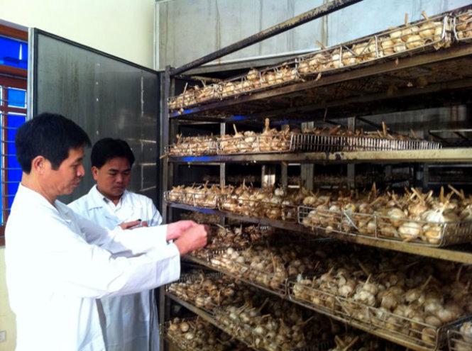 Quá trình tạo ra tỏi đen ở Việt Nam