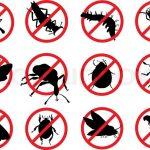 Xua đuổi côn trùng trong nhà với cách làm đơn giản và hiệu quả