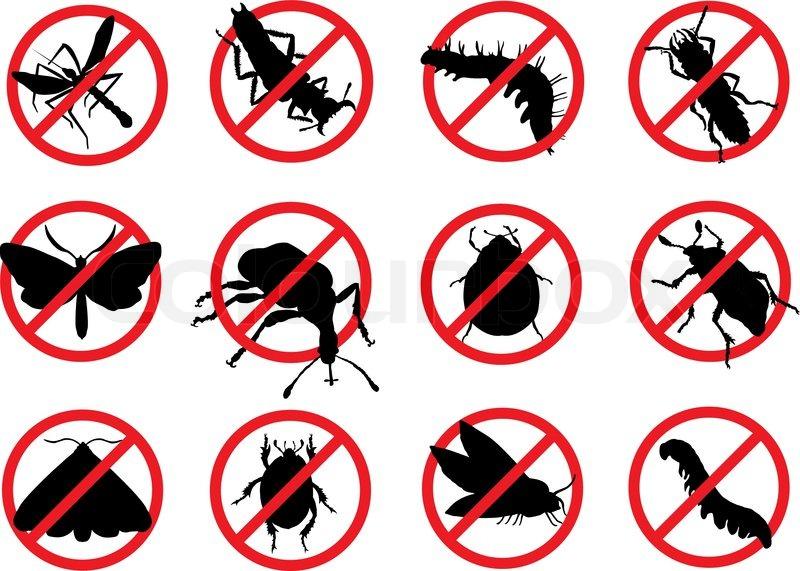 Xua đuổi côn trùng trong nhà với cách làm đơn giản và hiệu quả – Mẹo hay cuộc sống