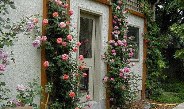 Tạo cảm giác tươi mát khi trồng cây xanh quanh nhà