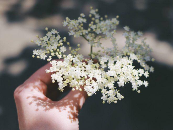 Chiết xuất của hoa Cơm Cháy và dầu Oải Hương sẽ làm cho da thật mềm mại