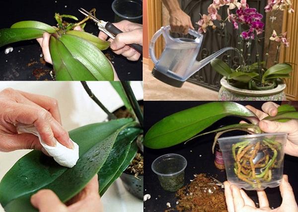 Phong lan là loại cây sinh trưởng ở nơi râm