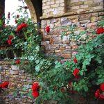 Cách chăm sóc hoa và cây cảnh trong nhà luôn tươi tốt