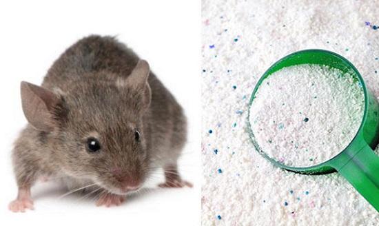 Bột giặt sẽ khiến chuột không quay lại nhà bạn