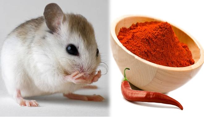 Ớt bột vừa hắc vừa hăng sẽ khiến chuột có thể ngửi thấy mùi từ xa và bỏ chạy
