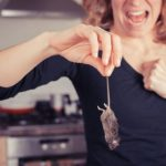Mách bạn 9 mẹo hay có thể đuổi chuột ra khỏi nhà.