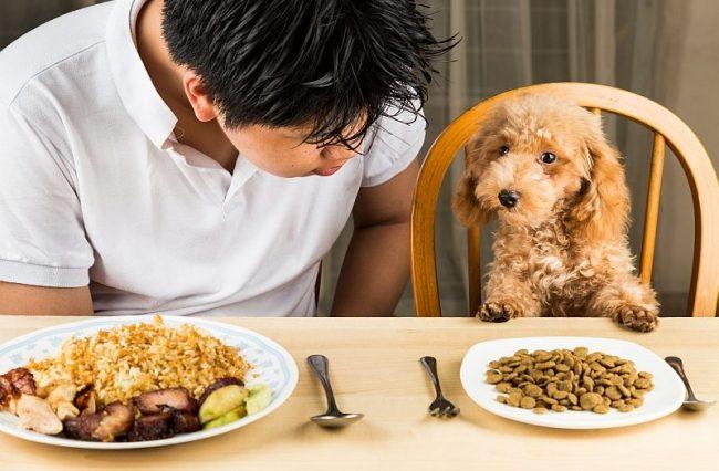 Không nên cho chó ăn thức ăn sống