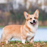 Các loại Pet cute nhất được nhiều người chọn nuôi hiện nay