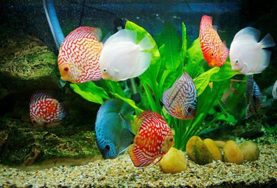 4 loại bệnh thông thường của các loài cá cảnh