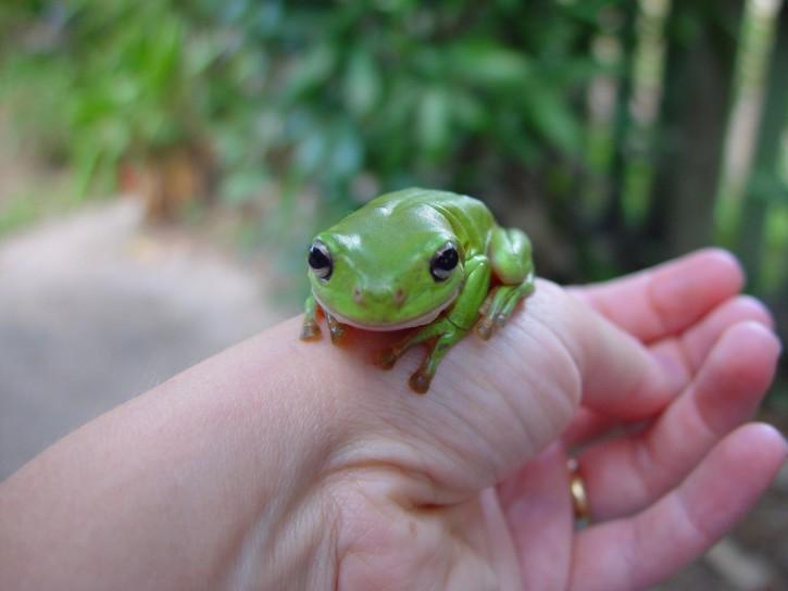 Kết quả hình ảnh cho Frogs pet