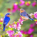Top 10 loại hoa đem lại may mắn, tài lộc nên trưng bày trong dịp Tết