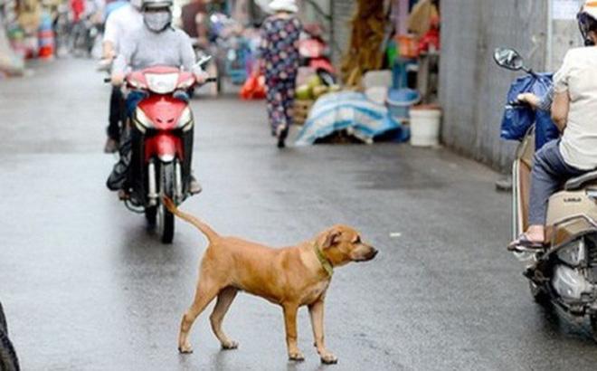 Chó thả rông sẽ làm tăng nguy cơ tai nạn giao thông