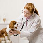 Các phòng khám chó mèo tốt tại Hà Nội. Bạn đã biết chưa?