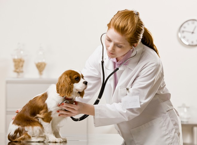 bác sĩ thú y