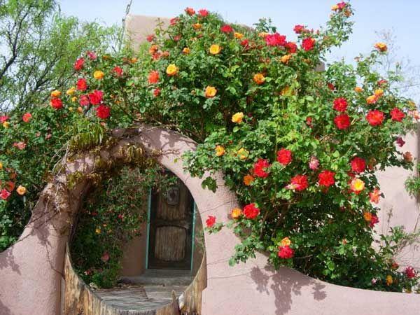 Giàn hoa hồng leo nhiều chủng loại, màu sắc , sai hoa với hương thơm ngọt ngào và dáng leo rủ mềm mại nơi ban công mang lại sự mới lạ , độc đáo, đây cũng chính là xu hướng trồng hoa ban công hot nhất hiện nay