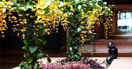 Hoa leo Hoàng Dương - cây dây leo xanh biếc với những chùm hoa to , dài màu vàng nổi bật
