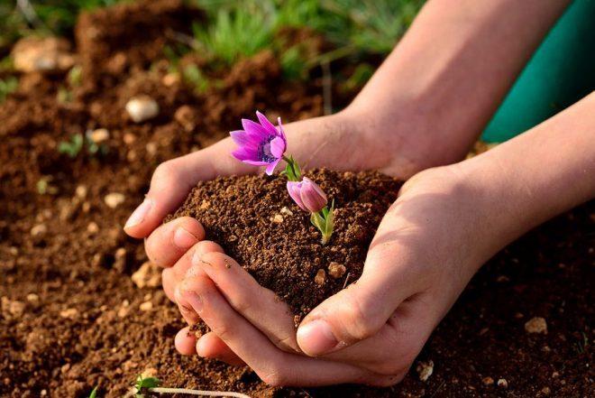 Chăm sóc cây trồng trong nhà theo phong thủy như thế nào?