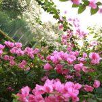 2 Cách chăm sóc hoa giấy đơn giản ngay tại nhà ai cũng làm được