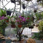 3 Bước cơ bản nhất giúp bạn chăm sóc hoa lan ngay tại nhà