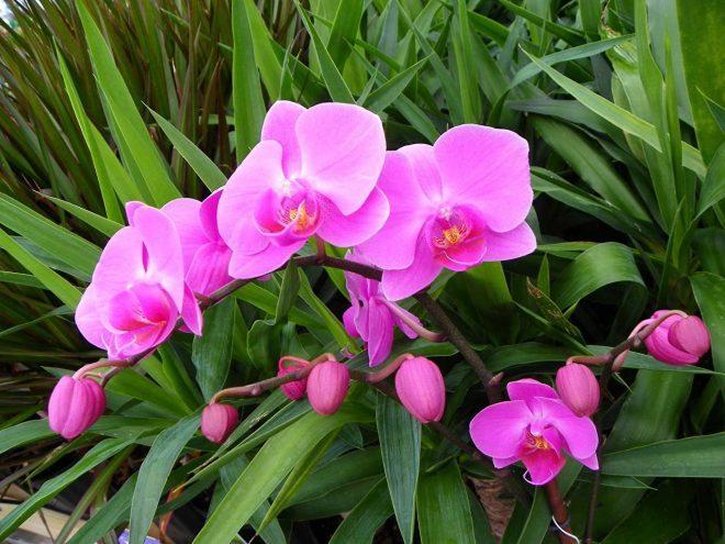 Lan sẽ ngày một tươi tốt và ra hoa đẹp khi bạn làm đủ 3 bước cơ bản trên