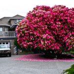 Nên trồng cây gì trước cổng nhà để hợp phong thủy