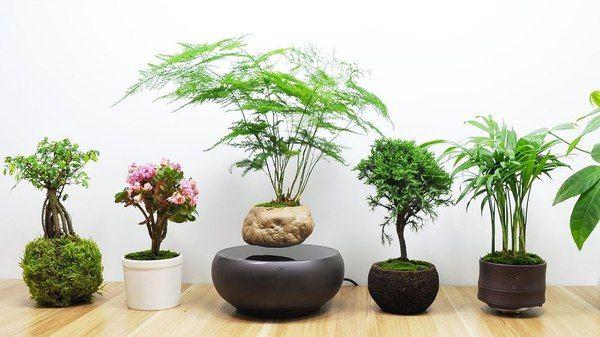 Yêu cầu cây trồng trong nhà theo phong thủy