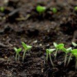 Phương thức cải tạo đất để rau xanh phát triển tốt nhất