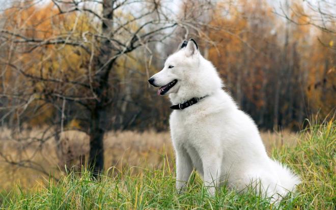alaska trắng tuyết