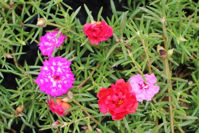 Hoa đẹp