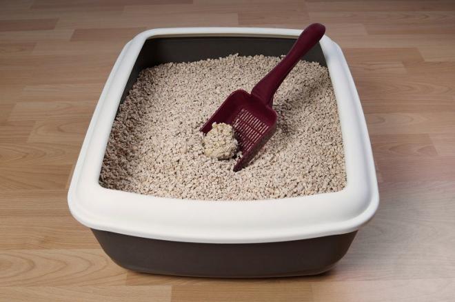 Chọn cát vệ sinh cho mèo cưng liệu có thật sự khó khăn?