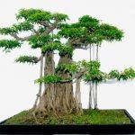 Cách tạo dáng cây cảnh cực đẹp và hiệu quả mà bạn nên biết