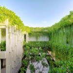 Bí quyết trồng và chăm sóc cây cúc tần Ấn Độ