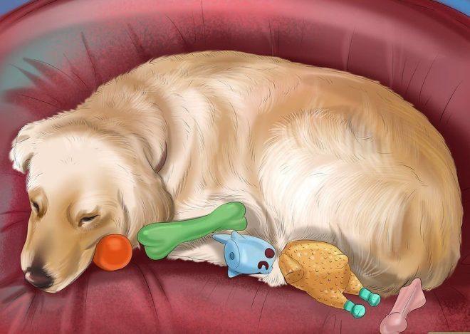 Hành vi của chó thay đổi giúp bạn dễ dàng nhận ra