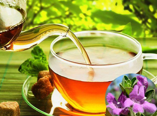 hoa của cây tuyết sơn phi hồ dùng làm trà