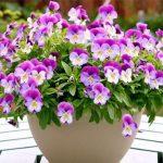 Điểm danh 18 loài hoa đẹp dễ trồng cho nàng yêu hoa