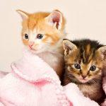 Kinh nghiệm vàng cho người mới chăm sóc mèo con