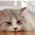 Nguyên nhân và cách xử lý mèo con bị tiêu chảy hoặc nôn