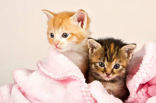 cách chăm soc mèo con