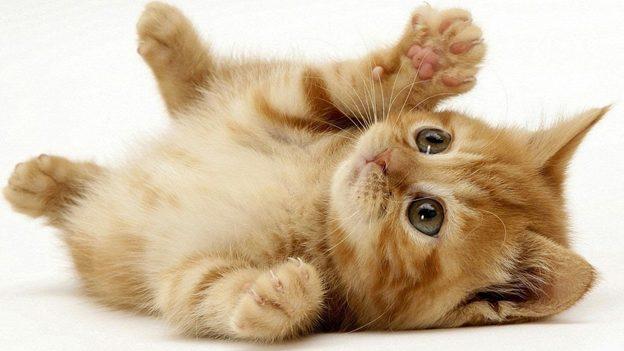 Cách chăm sóc mèo con trên 1 tháng tuổi