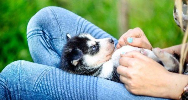 Môi trường sống tốt giúp chó phát triển một cách tốt hơn