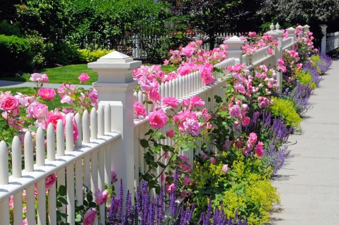 thiết kế hàng rào bao quanh tiểu cảnh
