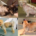 Điều trị viêm da cho chó yêu – đơn giản, an toàn tuyệt đối