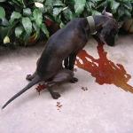 Thế nào là chó bị đi kiết? nguyên nhân và cách chữa trị hiệu quả nhất