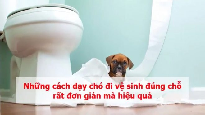 Cach Day Cho Di Ve Sinh