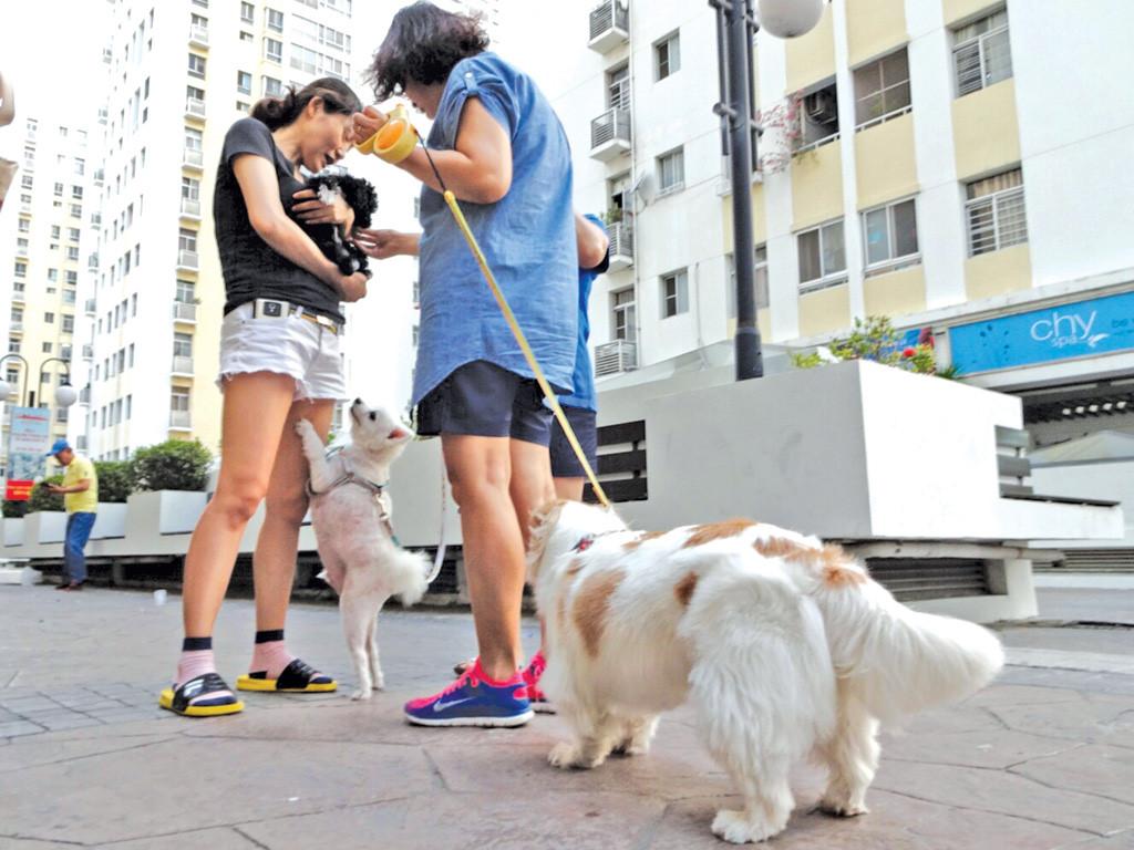 Kết quả hình ảnh cho hình ảnh nuôi chó