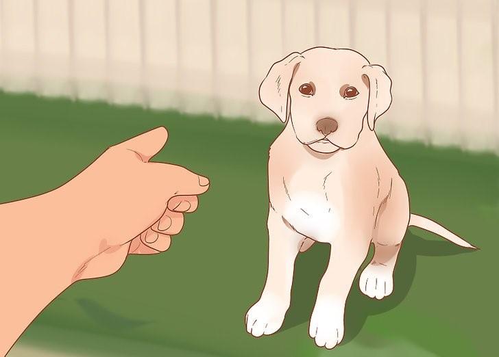 aid4134060 v4 728px Take Care of a Labrador Puppy Step 10 Version 2[1]