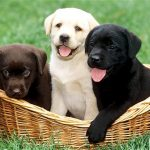 puppies 2769434b[1]