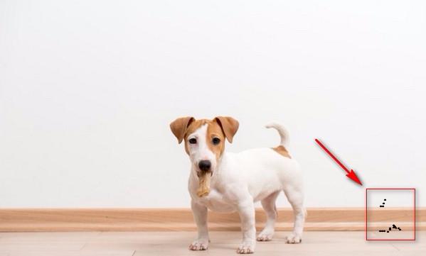 Ve Chó Bám Trên Tường Sẽ Biến Mất Chỉ Với 5 Cách Đơn Giản