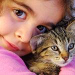 6 điều cần làm khi mới nhận nuôi mèo con