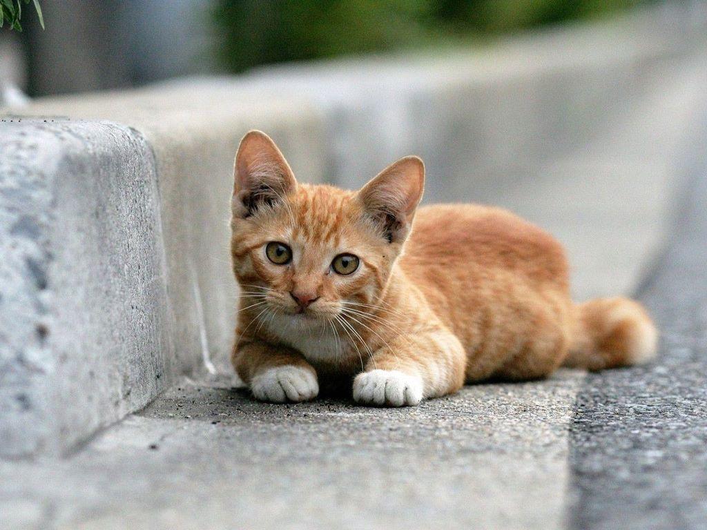 nhận nuôi mèo con